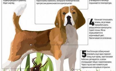 Инфекционные заболевания у собак