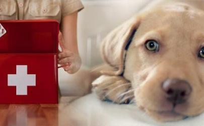 Заболевания селезенки у собак, диагностика и лечение