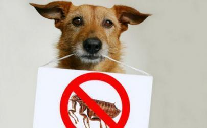Как уберечь собаку от пироплазмоза
