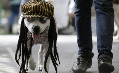 Выгул собак, нужно знать владельцу собаки