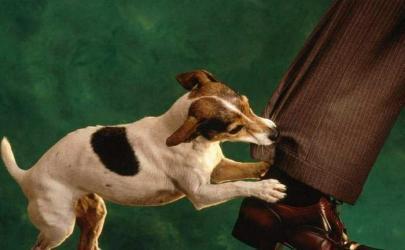 Как распознать и контролировать агрессию собак