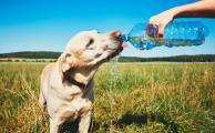 Чем опасны жаркие дни для собаки?