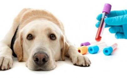 Услуги ветеринарной лаборатории: комплексное обследование