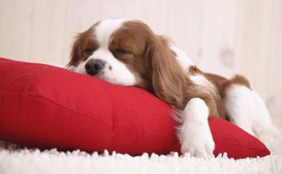 Лежанка для собаки: какой она должна быть?