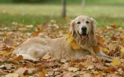 Уход за собакой: на что обратить внимание во время осенних прогулок