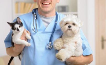 Как выбрать ветеринарную клинику